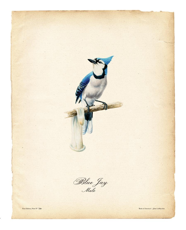 birds-of-america_2