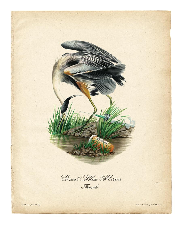 birds-of-america_3