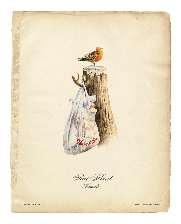 birds-of-america_4