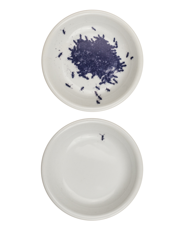 ant-plates_1